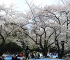 20140405代々木公園花見303
